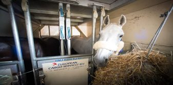 Olympic horses head to Rio from London Stansted